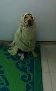 AK dog
