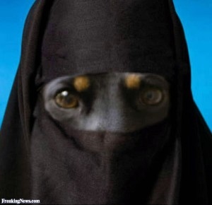 Dog-in-a-Burka--66721