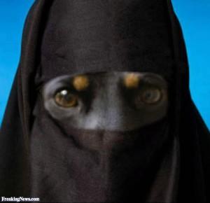 Dog-in-a-Burka--66721